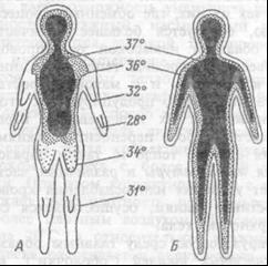 Распределение температуры в различных областях тела