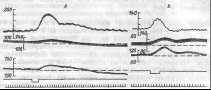 Рис.7.22. Величина и характер изменений сопротивления в сосудах селезенки и тонкой кишки при хеморефлексе с подвздошной кишки (А) и прессорном синокаротидном рефлексе (Б). Сверху вниз: системное артериальное давление, перфузионное давление в сосудах селезенки, тощей кишки, отметка раздраже¬ния, отметка времени (5 с). Шкалы — в мм рт.ст.