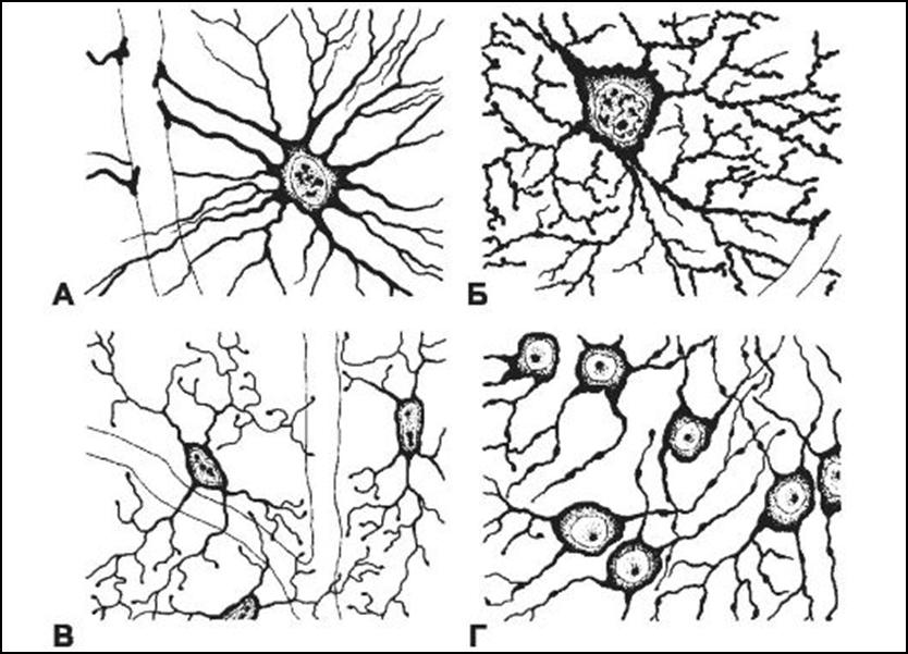 Виды Глиальных клеток