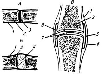 Типы соединения костей (схема):