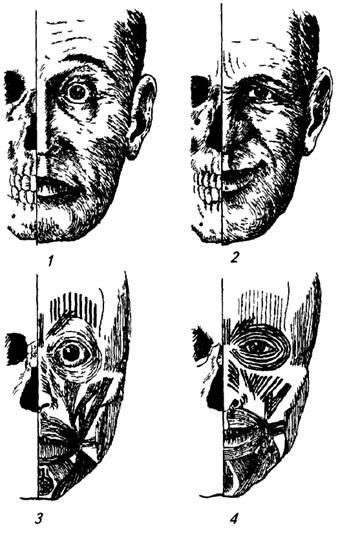 Анатомический анализ мимических выражений