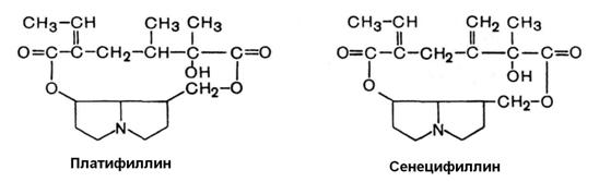 платифиллин, сенецифиллин