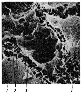 Синусоид и пространство Диссе